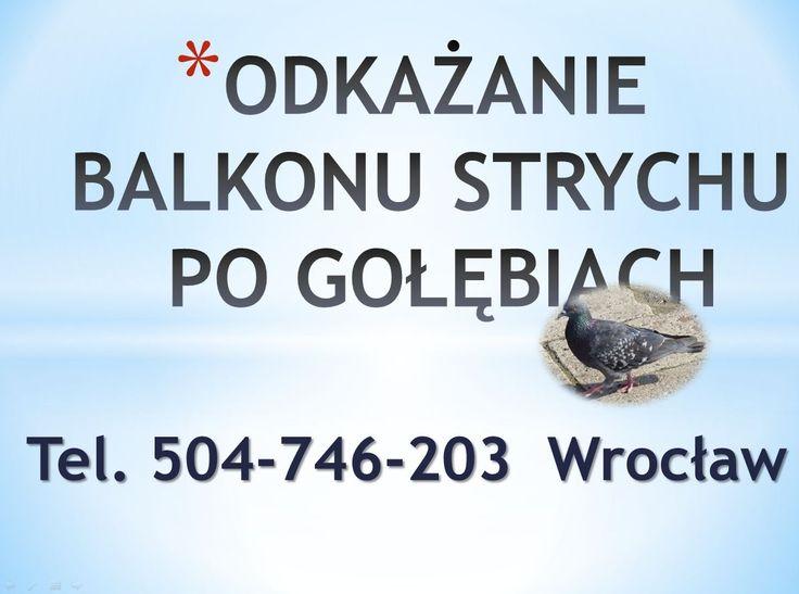 Sprzątanie strychów, tel 504-746-203, Wrocław,  czyszczenie podłogi po gołębiach i innych ptakach oraz usuwanie i czyszczenie, zanieczyszczonych przez ptasie odchody miejsc, pomieszczeń. Sprzątanie strychów po gołębiach. Wrocław, Wywóz rzeczy ze strychu, czyszczenie pomieszczeń z gołębi, Czyszczenie ptasich odchodów. Usuwanie ptasich odchodów i nieczystości. Dezynfekcja balkonu i strychu. Wrocław, tel 504-746-203, https://www.youtube.com/watch?v=jmdCuBCuZZ0