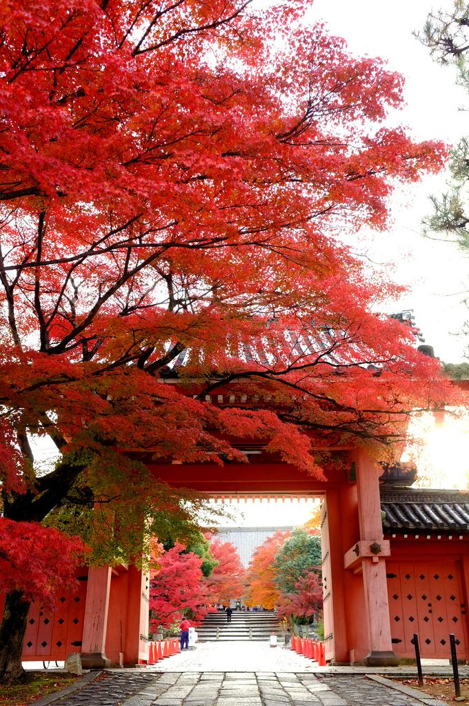 Shinnyodo Temple, Kyoto, Japan まっすぐ | by ( ´_ゝ`) Sho #Kyoto #AutumnLeaves #紅葉