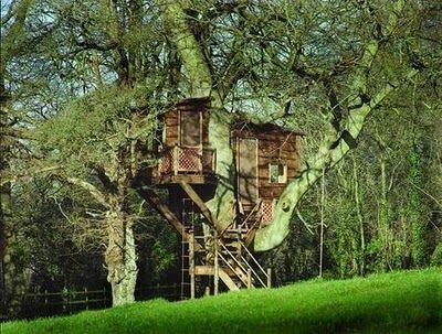 big tree house in big deciduous tree