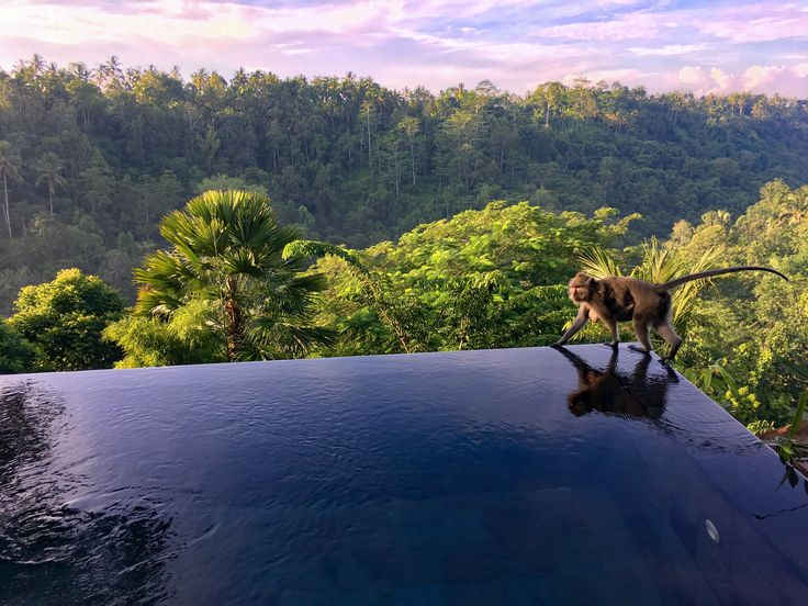One of my favorite photos from our Bali adventure is from this beautiful mommy walking across the infinity edge our pool in our villa while her little one clings on to her waist  | Bali | http://zeebalife.com/best-hotels-bali-experience-hanging-gardens-bali/ #zeebalife