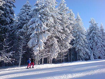 winter | Schwarzwald im Winter