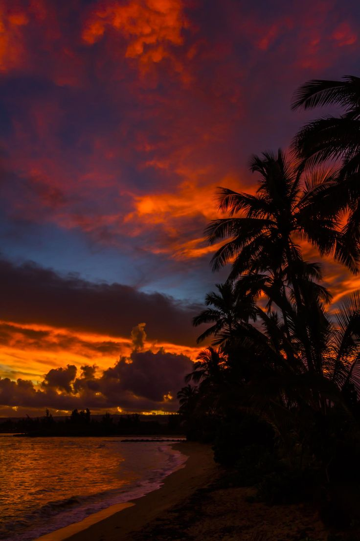 112 best images about Sunsets on Pinterest | Palm trees ...