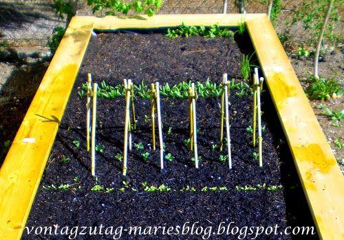 Hochbeet. Erste Bepflanzung im März. Salat, Erbsen und Spinat.  @vontagzutagmari http://vontagzutag-mariesblog.blogspot.com