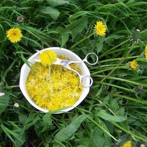 Желтый женьшень: самое м…