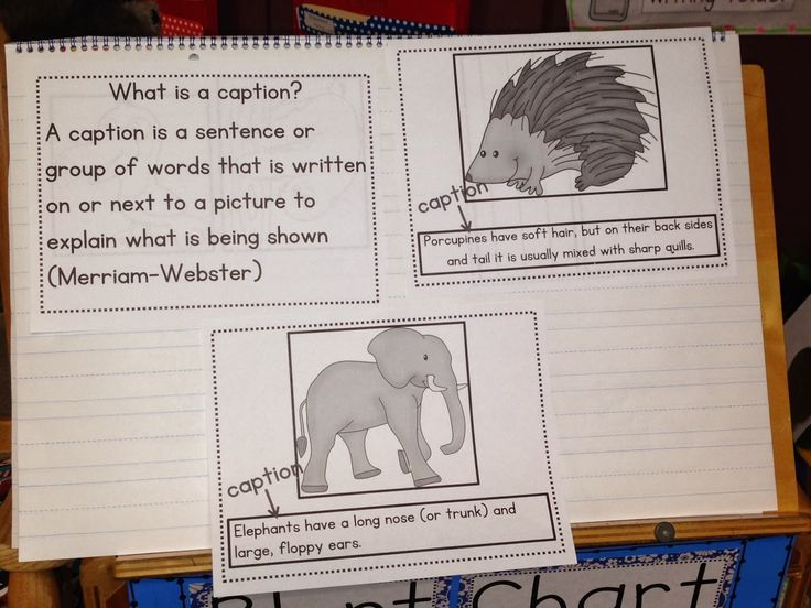 today we focused on the nonfiction text feature captions