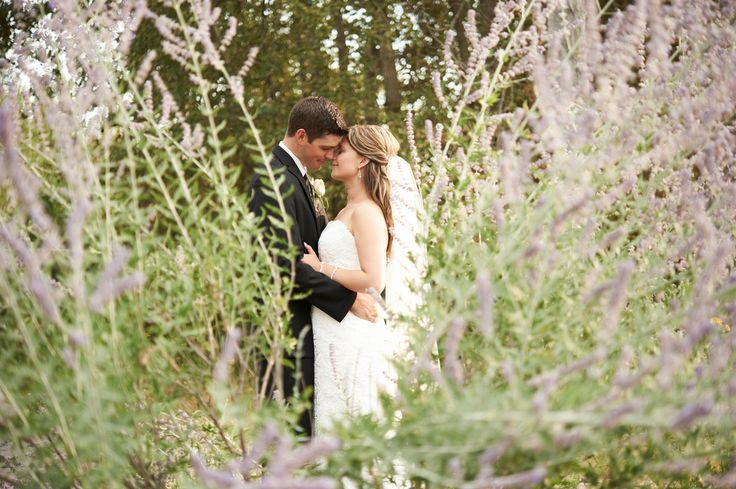 Amidst the lavender, Kelowna Wedding