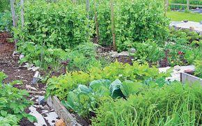 Growing vegetables using the no-dig method reaps great rewards