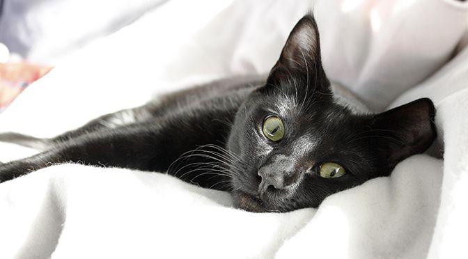 4 cadeaux pour votre petit chat
