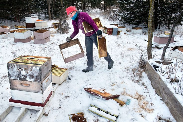 """""""Vandalism destroys half million bees, wipes out Sioux City honey business"""" via the Sioux City Journal #pollinators #agriculture P.S. Read all the way to the end for some restored hope in humanity."""