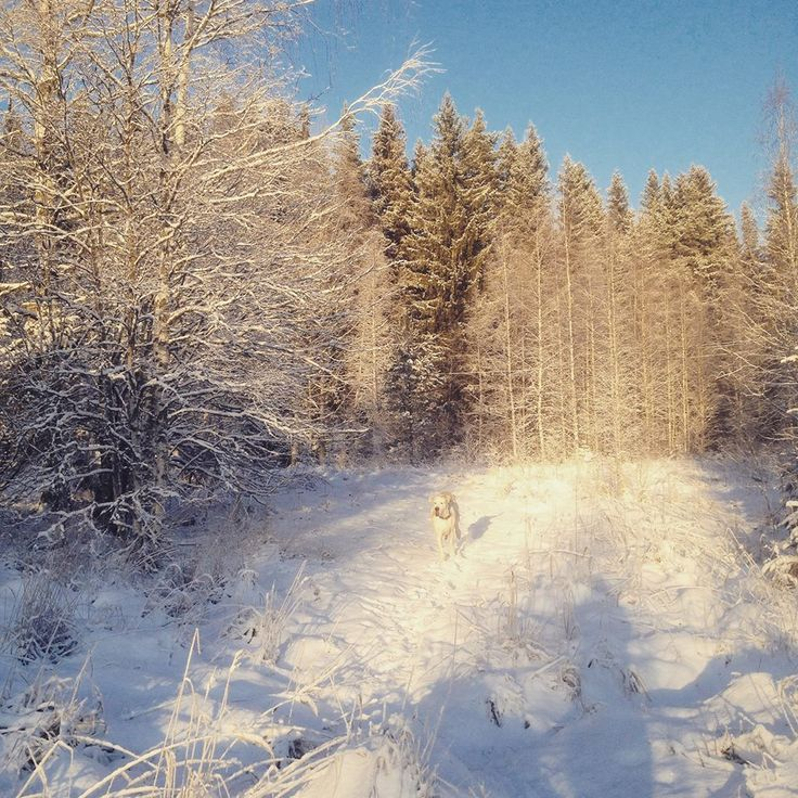 Manta the Dog running and the Boxing Day in Finland