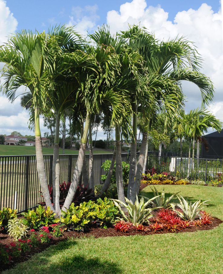 Tropical Landscape In Jupiter Country Club, Jupiter, FL By Pamela Crawford.  See Over 2000 Photos Of Palm Beach Landscapes And Container Gardens  Suitable For ...