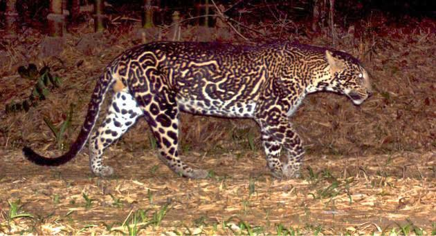 835 best Kitty Kats images on Pinterest   Kitty cats ...