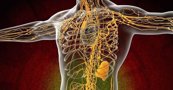 10 простых способов очищения лимфатической системы. Только натуральные средства!