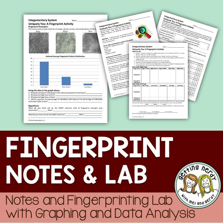 Use this integumentary system fingerprinting activity to simulate detective work and FBI or crime scene investigation in your classroom. Everyone has a unique set of fingerprints, even identical twins! In this lab, students will learn about the various types of fingerprint patterns and determine their own pattern for each finger. With this information, they will figure out the distribution of fingerprint patterns within their classroom and graph their data. It's a great mix of math…