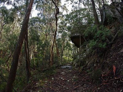 Mount York Walk - t was in 1813 when Blue Mountains were finally crossed from Sydney. The historic road is known as Cox's  Road, later it was replaced by Lawsons Long Alley Road which was built in 1822-1823. Since then several roads were built for the same purpose but it was in 1912 when they finally built a road that accepts motor vehicle.