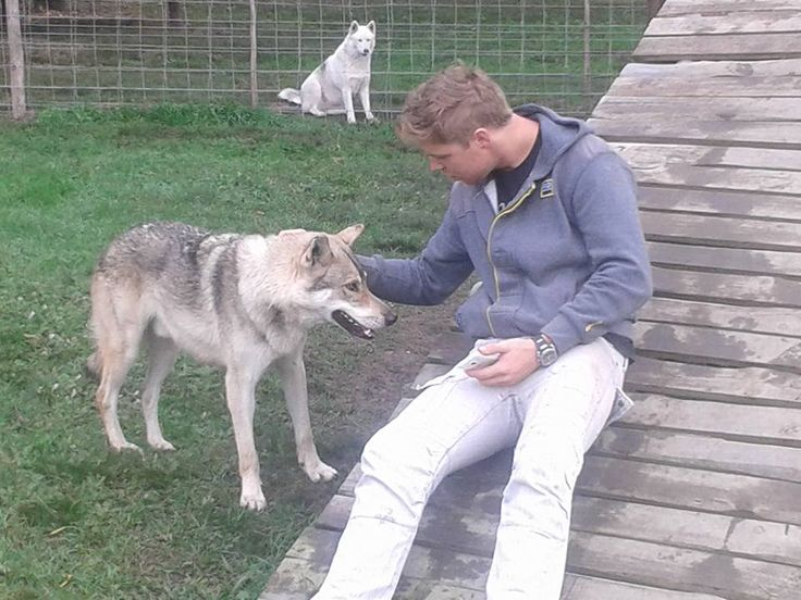 The Garden Route Wolf Sanctuary is situated south of the N2 between Knysna and Plettenberg Bay. Our interactive guided tours that takes you through the wolf enclosures is a truly unique experience and allows you to get really close and personal with them. http://wolfsanctuary.co.za/