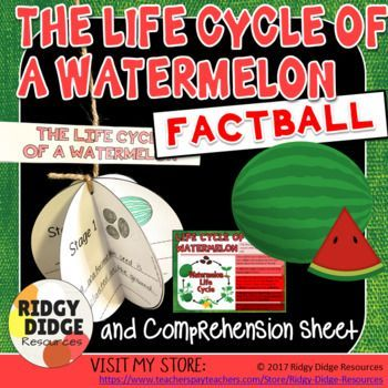 The Life Cycle of a Watermelon Factball and Comprehension Sheet Printable Activity #lifecycleactivities cycleactivities
