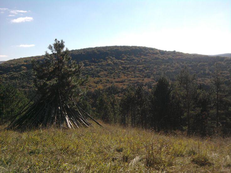 Padurea Faget, Cluj