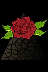 Beauty of the Red Rose