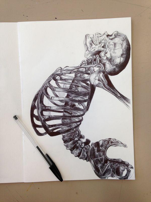 Скелет рисунок, рисунок ручкой, скелет, анатомия, Искусство, длиннопост