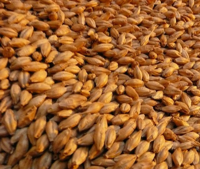 Barley Beer was an Important Invention of Iron Age Europe