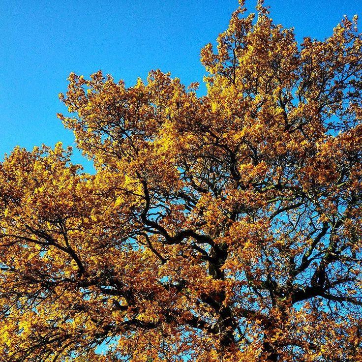 Klarer blauer Himmel bevor die Sonne bald schon wieder untergeht  #alex #luftschnappen #pause #sonne #himmel #blau #herbst #baum #laub #farben #greenape #nord #niedersachsen #makesyourlifebetter