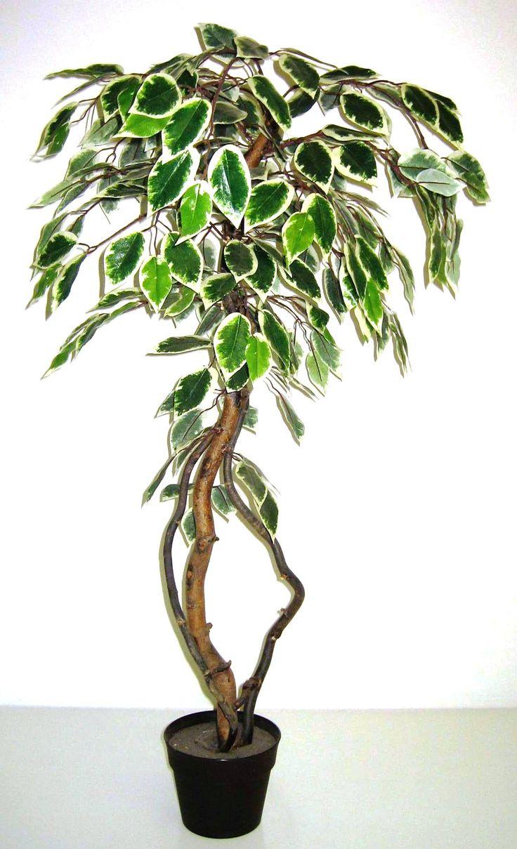 90 cm-es mű ficus fa