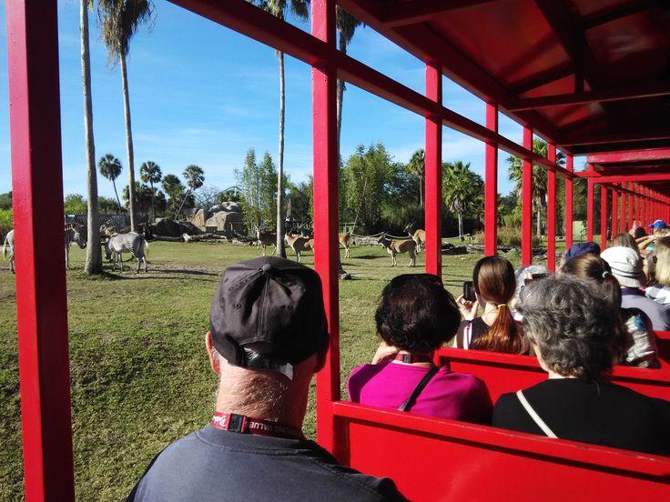 1000 Ideas About Busch Gardens Tampa Bay On Pinterest