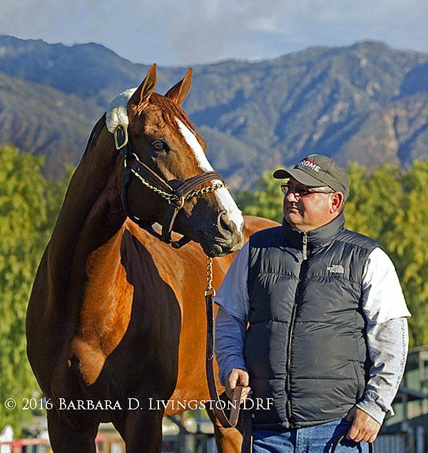 Best California Chrome Images On   Horse Racing