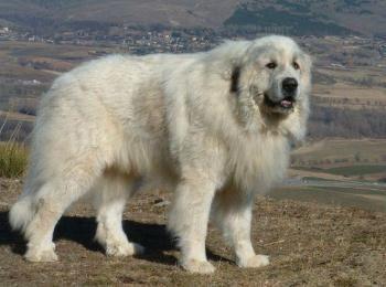 MascotaDoméstica.com es una web de animales domesticos la cual presenta información de razas de perros y gatos, especies de peces, aves y todo sobre el mundo de los animales.http://www.mascotadomestica.com/