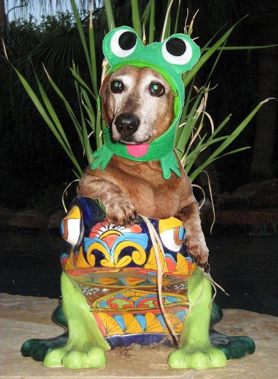 Infrognito Frog Costume For Dogs And Cats Frog Costume