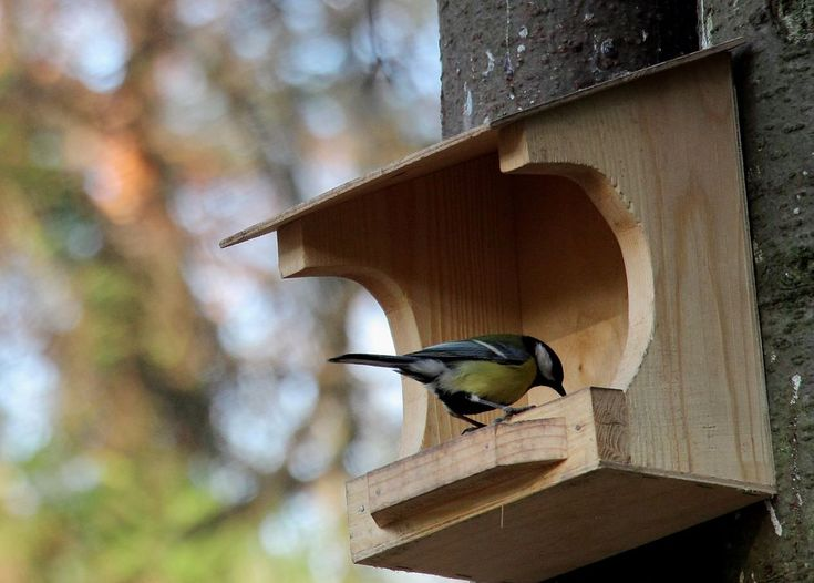 Кормушка для птиц: 18 интересных вариантов - Ярмарка Мастеров - ручная работа, handmade