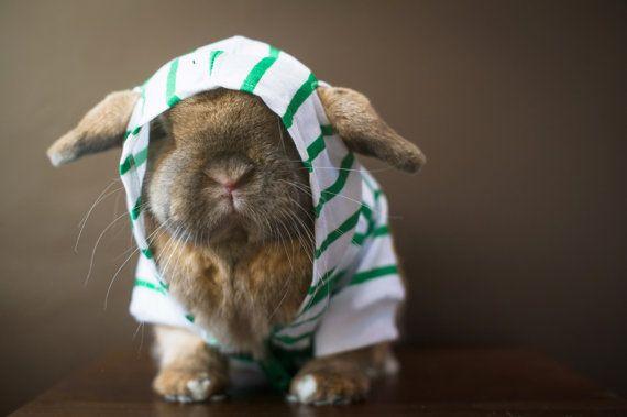 Bun in a hoodie.  Not happy!