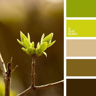 color verde joven, de color verde lechuga, elección del color, marrón verdoso…