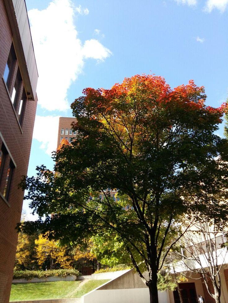 Picture from Minneapolis University, Minnesota ☺