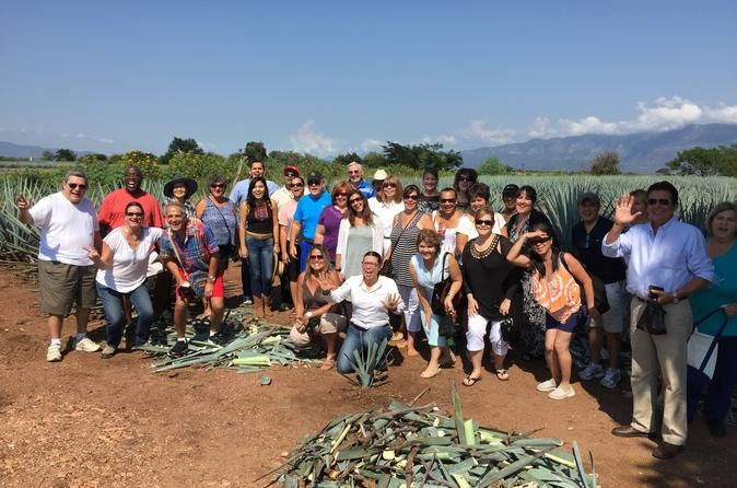 Tequila Cultural Tour from Guadalajara Live the experience in the magic village of Tequila on this half-day cultural tour from Guadalajara. You will get to harvest the fields of agave, taste tequila at a distillery and learn all about this famous drink.After hotel pickup in the morning, you will start your journey towards the town of Tequila at 10am. You will arrive to Casa Herradura Distillery (Hacienda San Jose del Refugio) at 11am where you will be able to tour the faciliti...