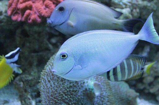 Hallo...  Temui aku di Ocean world Science Center Trans Studio Bandung  #oceanworld  #underwater #sciencecenter  #transstudiobandung