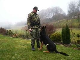 Training a SAR (Search and Rescue) Dog