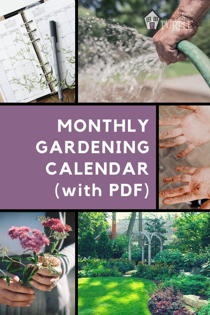 Monthly Gardening Calendar For Busy Gardeners With Pdf