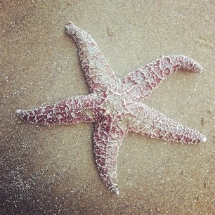 I got 5 on it.: Starfish 3 Beaches 3