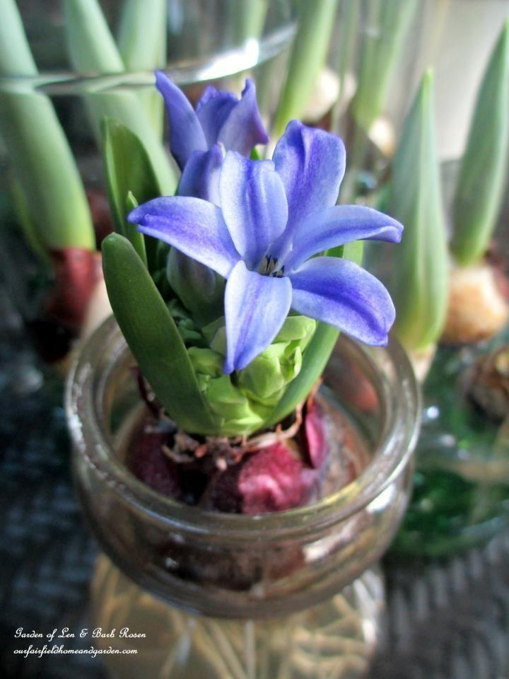 Indoor Gardening Winter Beauty