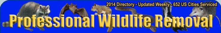 Atlanta Wildlife in Georgia Rat Squirrel Bat Snake and Raccoon Removal