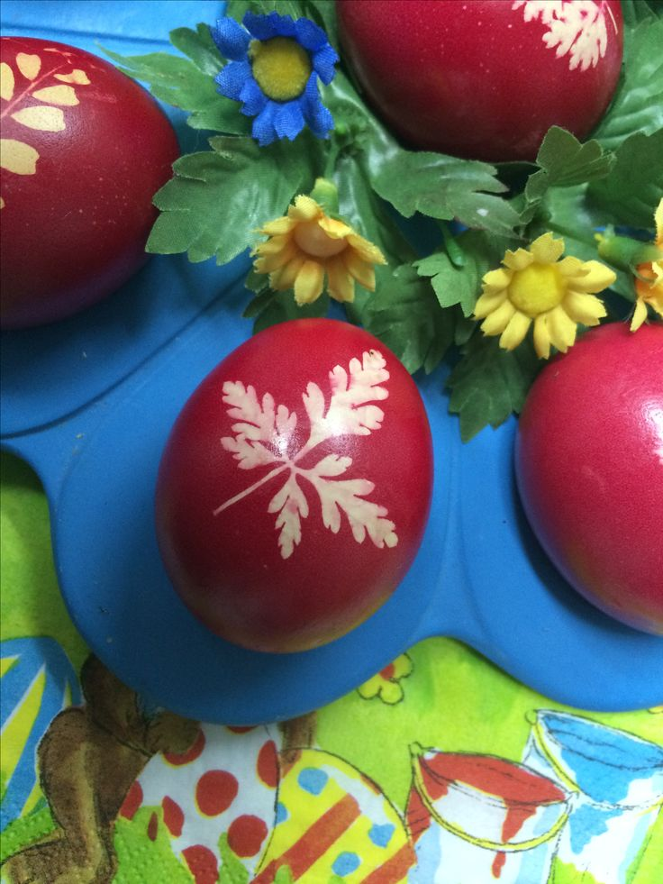 Decorating easter eggs with red dye and imprint of fresh leaves.