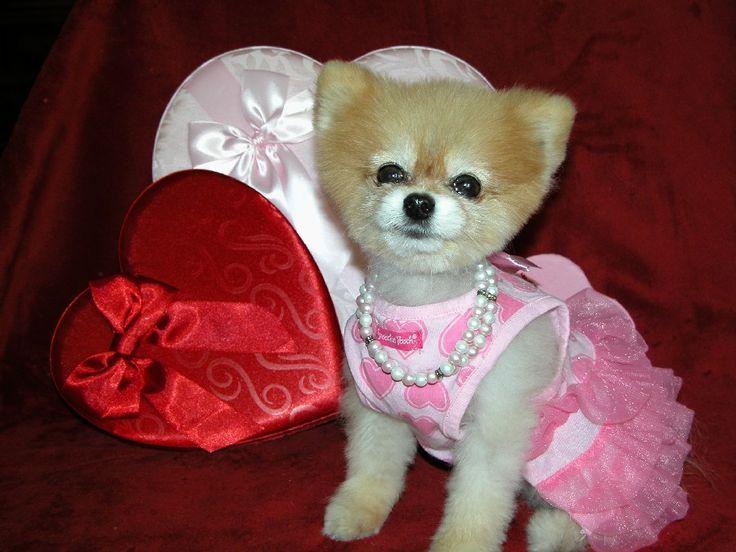 Bella shares 5 Valentine tips for pet safety | PetMeds Blog