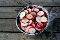 Hur mycket jag än gör kan det aldrig bli nog  Kollegan, som har några äppelträd i sin trädgård, måste ha gjort något rätt i år eftersom grenarn