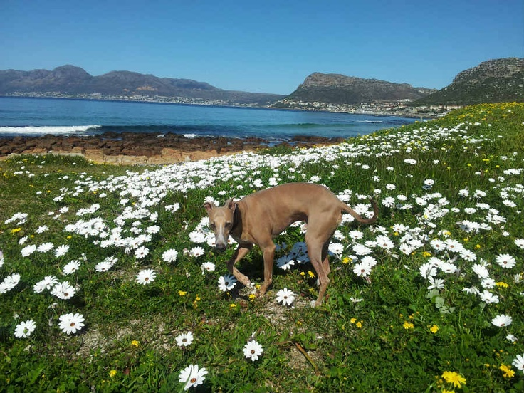 Walking Cape Town – The Easy Fish Hoek To Muizenberg Route