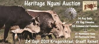 stud cattle catalogue - Google Search