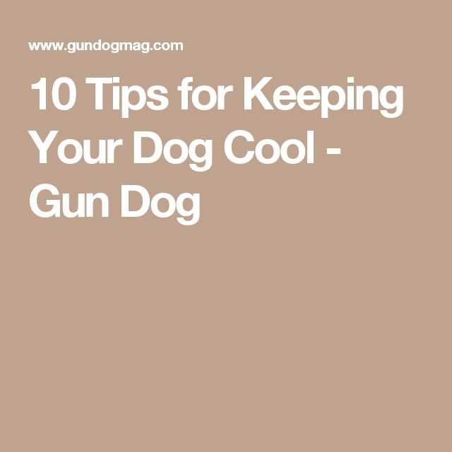 10 Tips for Keeping Your Dog Cool - Gun Dog