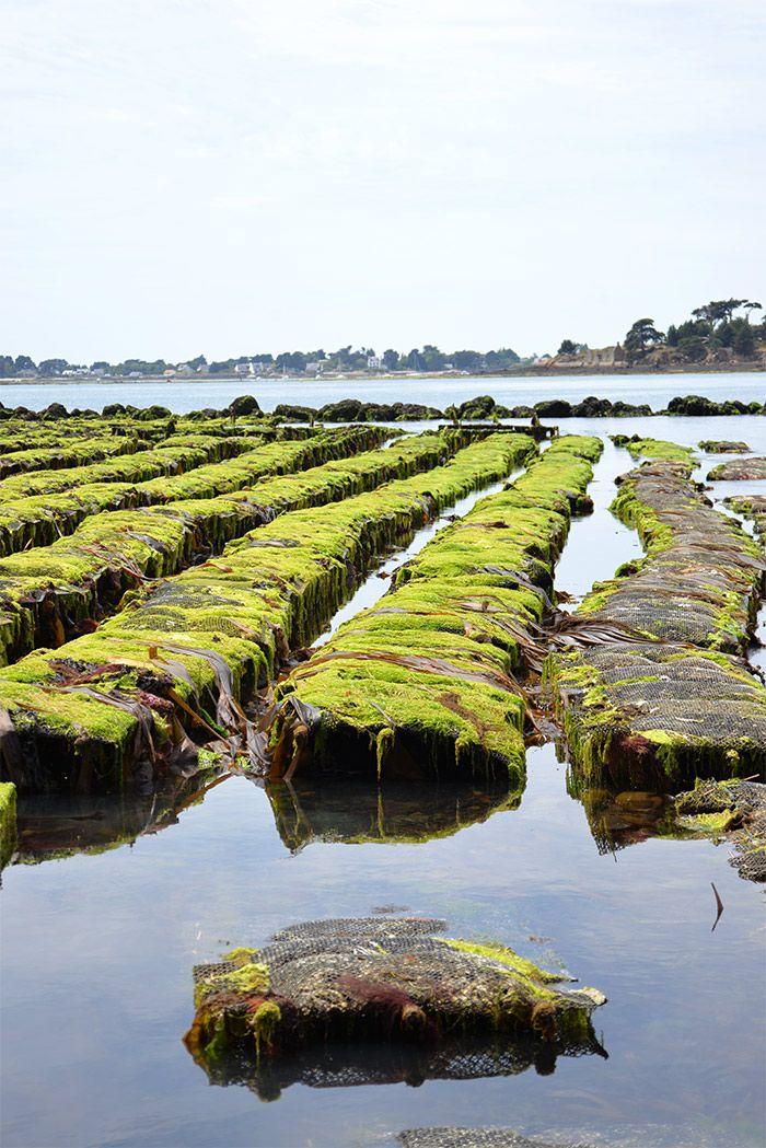 Magnifique #Morbihan en Bretagne ...