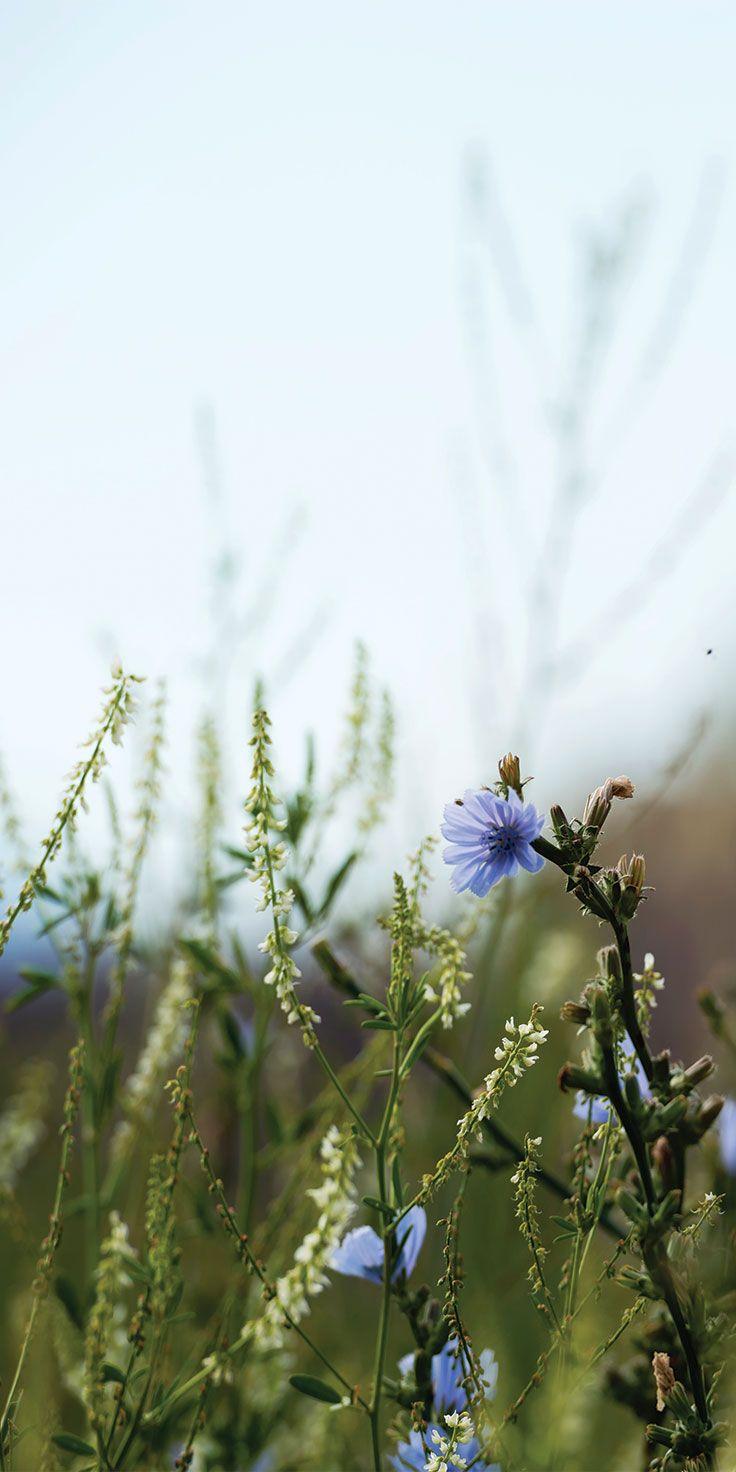 Wildflowers in the fields of Provence - by Lauren Bath